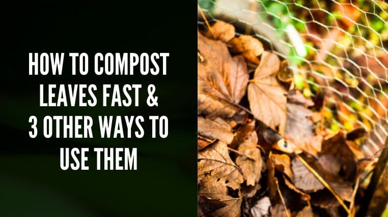 How to compost leaves fast