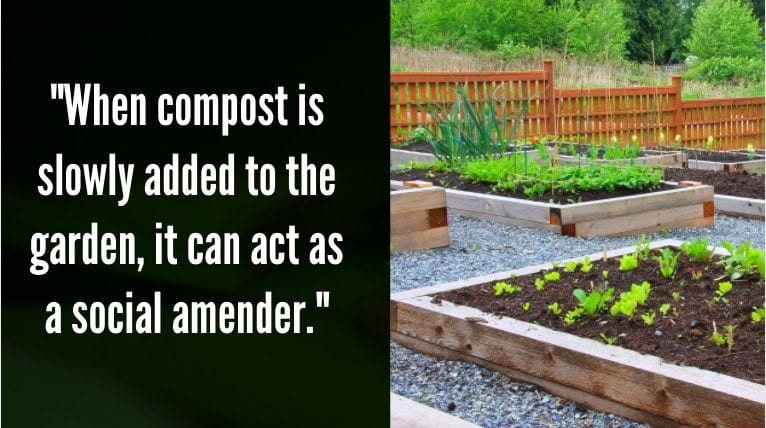 Adding Compost to Existing Plants