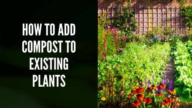 How to Add Compost to Existing Plants
