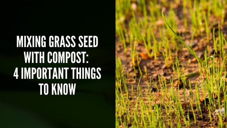 Mixing Grass Seed With Compost