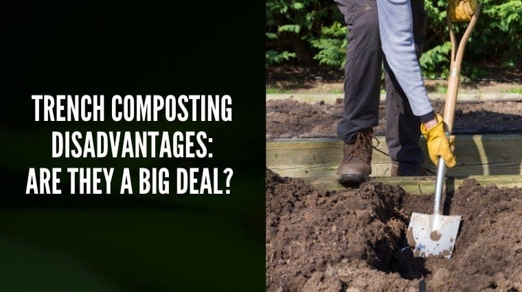 Trench composting disadvantages