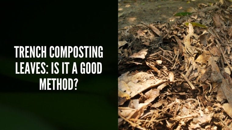 Trench composting leaves