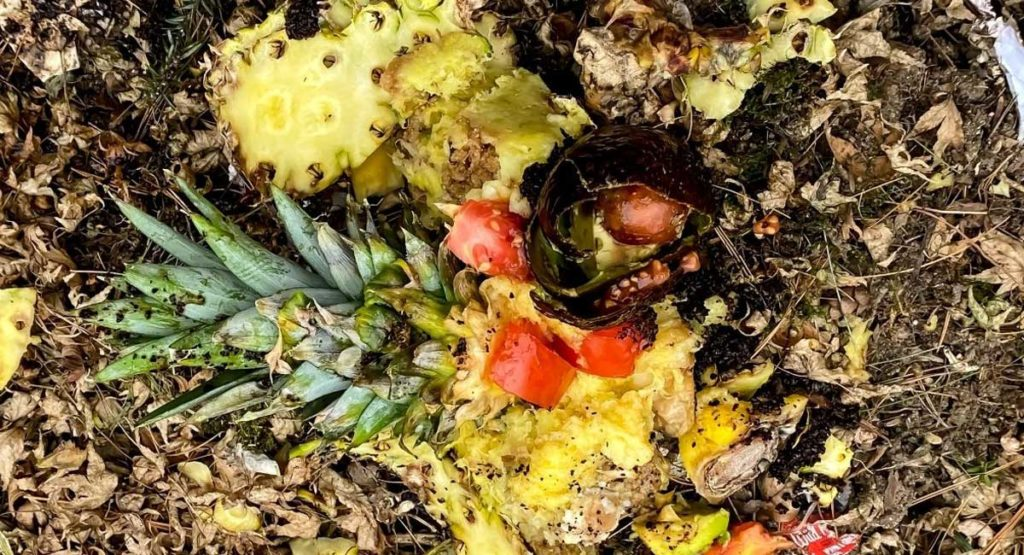 Can You Compost Pineapple