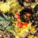 Fertilizing 101 – Can You Compost Pineapple?